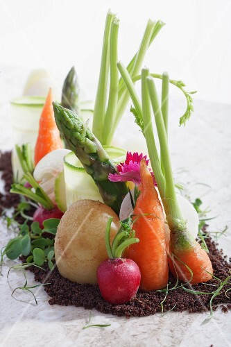 An arrangement of various different vegetables in soil