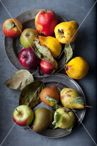 An arrangement of pip fruits with various apples, quinces and pears