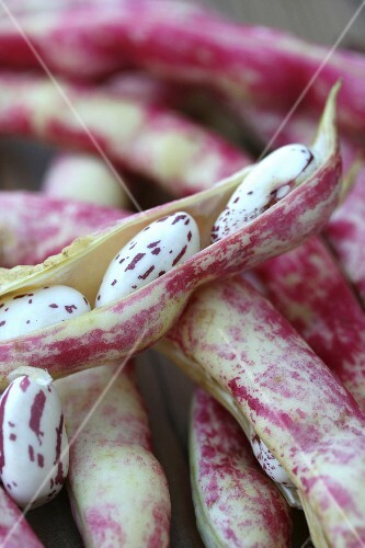 Borlotti beans in their pods (close-up)