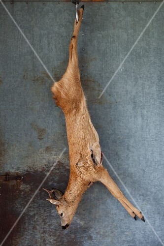 A slaughtered, hanging roebuck