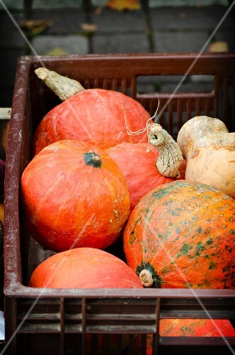 Pumpkins in a plastic crate