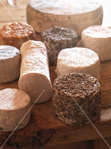 Various whole goat's cheeses on a wooden table