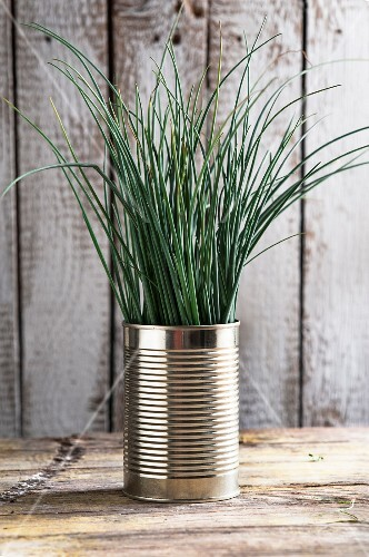 Chives in a tin can