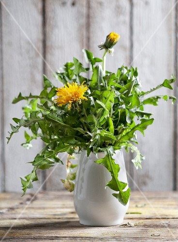 Dandelions in a white vase