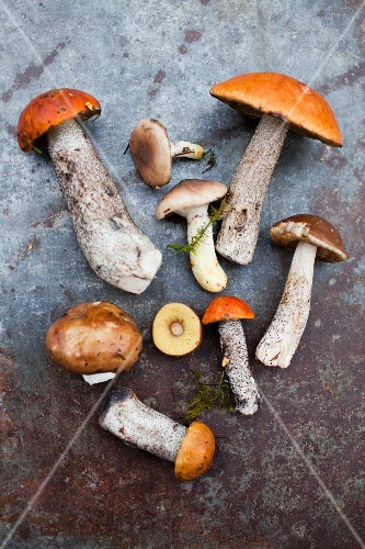 Various fresh edible mushroom (seen from above)