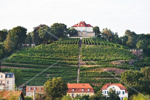 Martin Schwarz and Grit Geissler's vineyard Schloss Friedstein in Radebeul