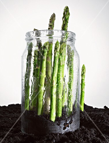 Green asparagus in a jar in soil