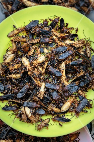 Edible insects at a market in Thailand