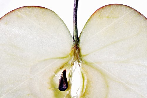An apple slice (close-up)
