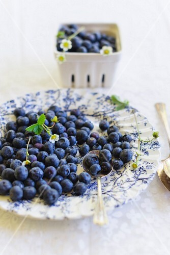Fresh blueberries on a floral-patterned plate