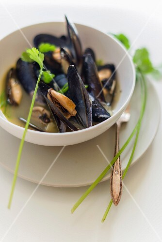 Steamed mussels in a white wine broth