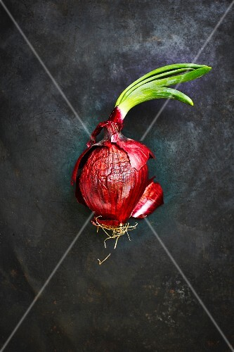 A red onion (seen from above)