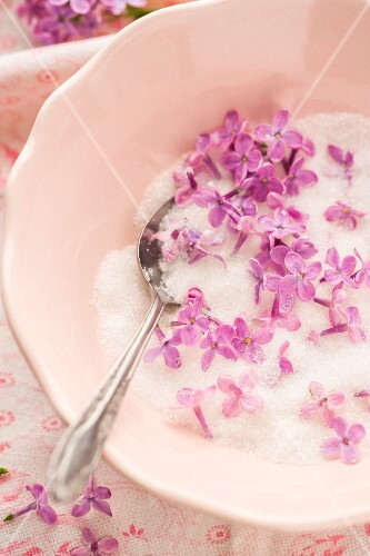 Pink lilac flowers in a bowl of sugar