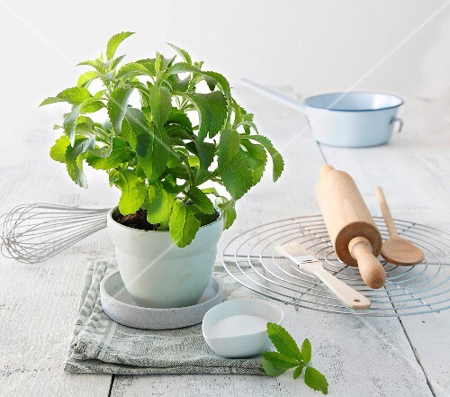 A stevia plant and baking utensils