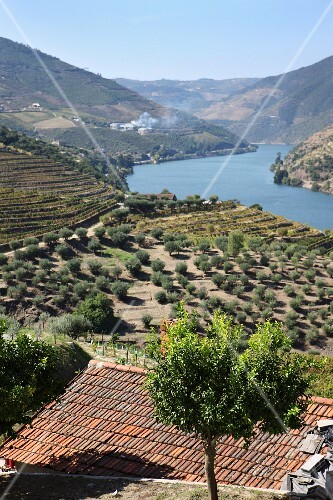 A wine-growing region in Douro (Portugal)