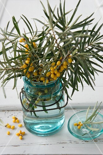 Sprigs of sea buckthorn in a glass jar