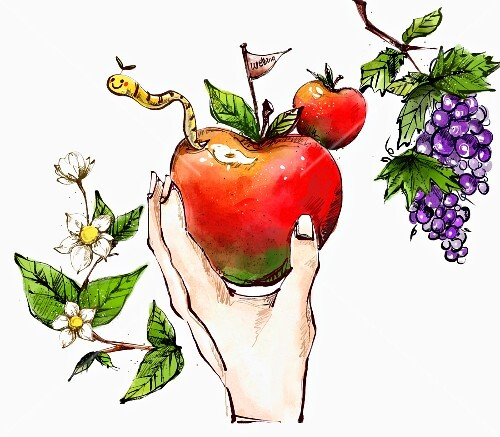 A hand holding an apple (illustration)