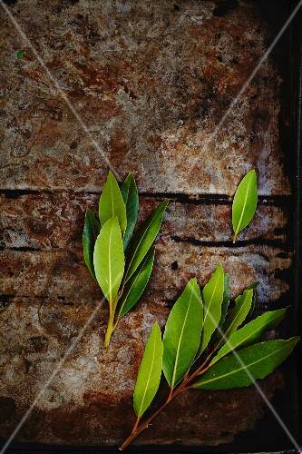 Fresh bay leaves on a weathered surface