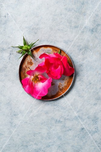 Pink rose petals on a metal plate