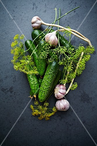 Fresh pickling cucumbers with sprigs of dill flowers and bulbs of garlic (seen from above)