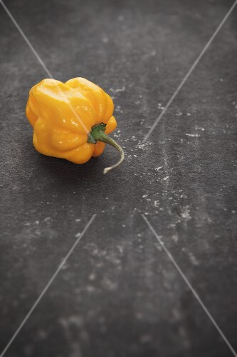 A yellow Habanero chilli pepper on a grey surface