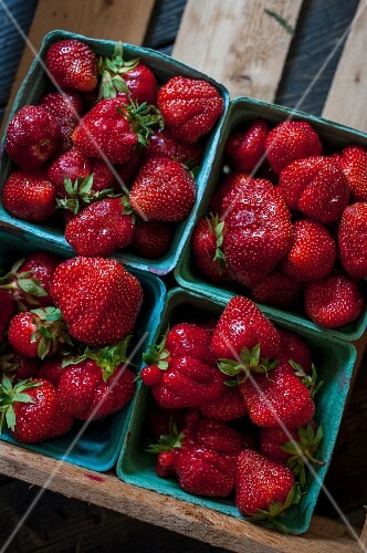 Strawberries in four cardboard punnets (seen from above)