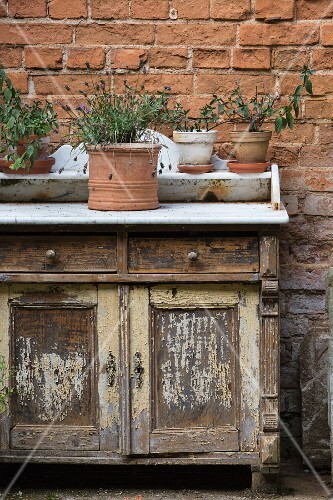 Various potted herbs on rustic cabinet