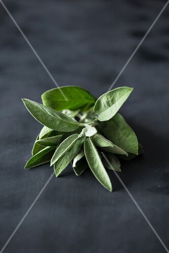 Fresh sage on a dark surface