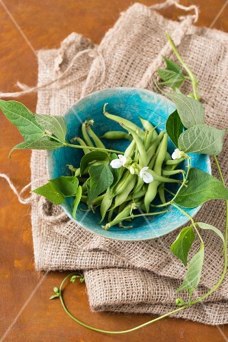 Green beans, bean flowers and leaves