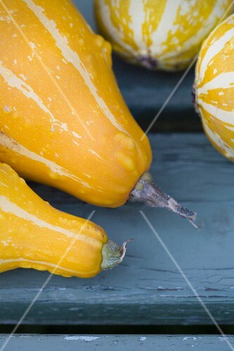 Yellow and white stripped squash (detail)