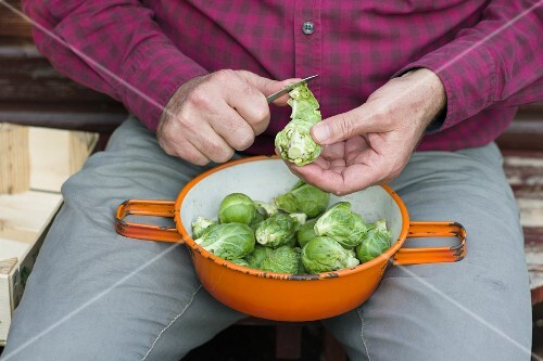 A man peeling freshly harvested Brussels sprouts