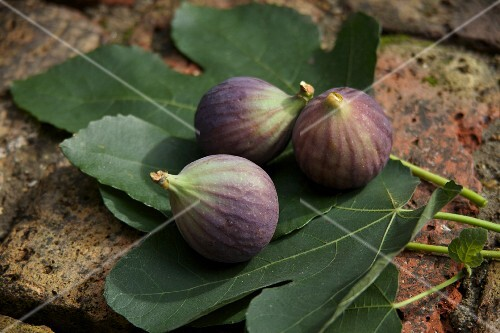 Fresh figs on fig leaves