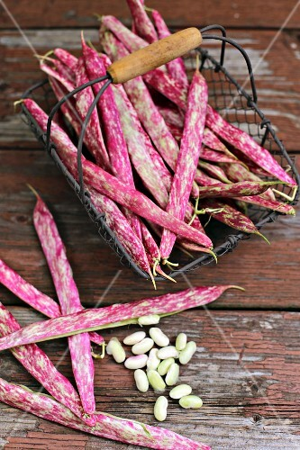 Fresh borlotti beans in a wire basket on a wooden table