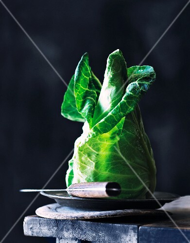 Pointed cabbage on a metal plate