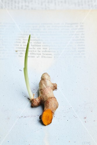 A turmeric root with a shoot