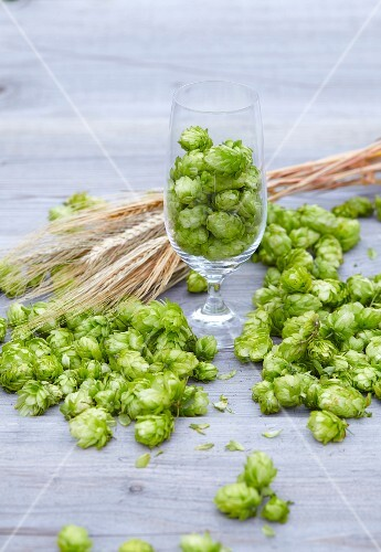 Hops and ears of barley