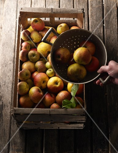 Various types of apples in a wooden crate and in a colander