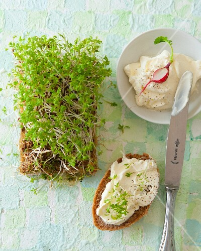 Bread topped with cream cheese and cress (seen from above)