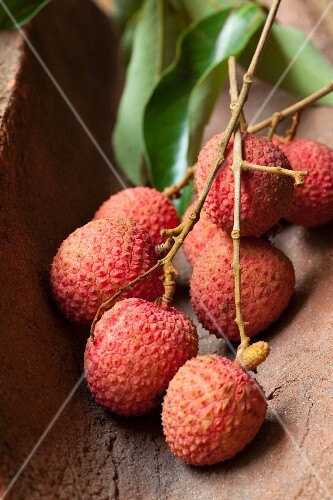 Lychees on a twig