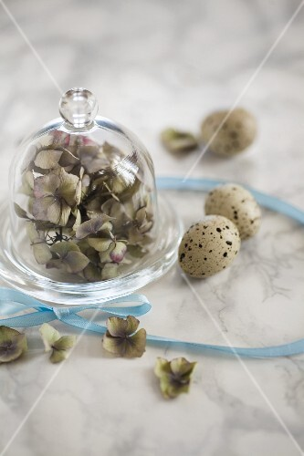 Hydrangeas under a glass cloche, quail's eggs and a ribbon on a marble surface