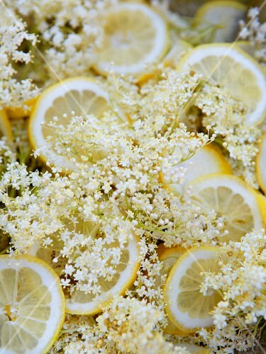 Elderflowers and lemon slices (ingredients for making elderflower juice)