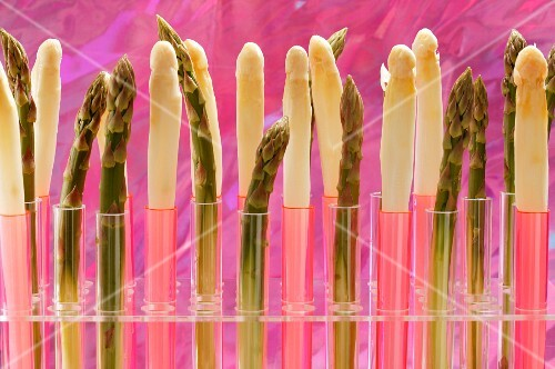 Green and white asparagus spears in test tubes