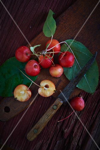 Crab apples with leaves