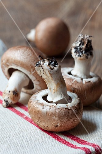 Button mushrooms on a white tea towel