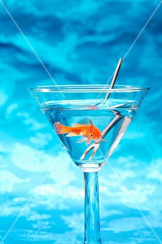 A goldfish and a fork in a glass of water against a blue surface