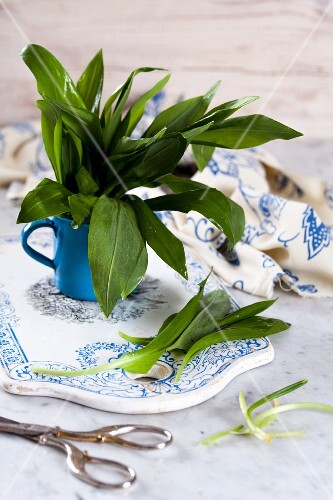 Fresh wild garlic in an enamel mug