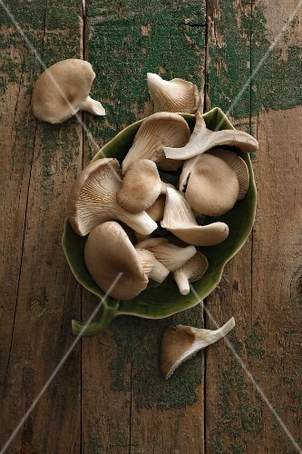 A bowl of oyster mushrooms on a wooden surface