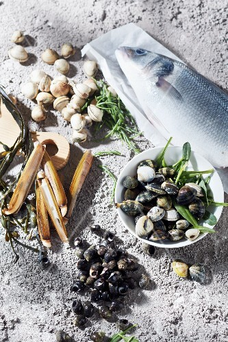 An arrangement of branzini and various shells on sand