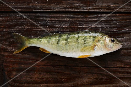 Yellowfin perch on a wooden board