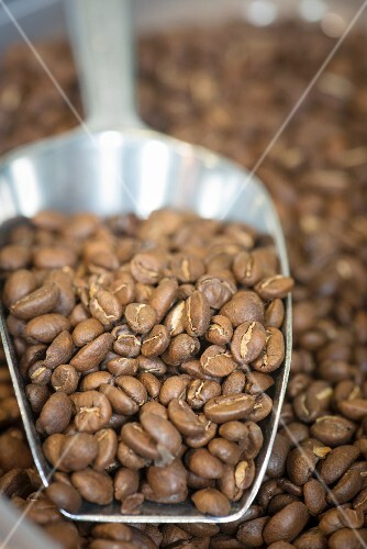 Roasted coffee beans on a metal scoop